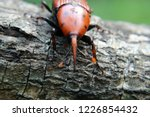 large rusty red colour palm... | Shutterstock . vector #1226854432