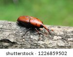 large rusty red colour palm... | Shutterstock . vector #1226859502