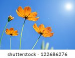 cosmos flower against blue sky... | Shutterstock . vector #122686276