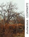 autumn forest  late fall season.... | Shutterstock . vector #1226906572