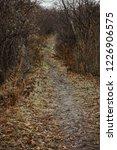 autumn forest  late fall season.... | Shutterstock . vector #1226906575