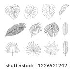 hand drawn tropical leaves... | Shutterstock .eps vector #1226921242