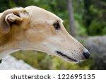 Greyhound Profile