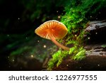 glowing small mushroom and... | Shutterstock . vector #1226977555