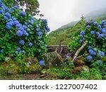 image of beautiful blooming... | Shutterstock . vector #1227007402