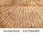 cut tree a huge stump with cuts ...   Shutterstock . vector #1227066385