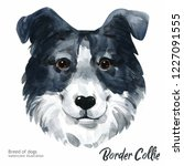 portrait cute dog isolated on... | Shutterstock . vector #1227091555
