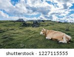 a cow on a big green alpine... | Shutterstock . vector #1227115555