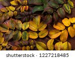 fall rustic greeting background ... | Shutterstock . vector #1227218485