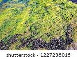 unusual background of mussels ... | Shutterstock . vector #1227235015
