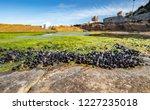 unusual background of mussels ... | Shutterstock . vector #1227235018