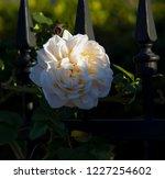 beautiful creamy white heritage ...   Shutterstock . vector #1227254602