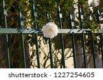 beautiful creamy white heritage ...   Shutterstock . vector #1227254605