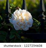 beautiful creamy white heritage ...   Shutterstock . vector #1227254608