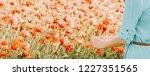 unrecognizable woman picking... | Shutterstock . vector #1227351565