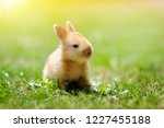 Stock photo baby rabbit eating grass outdoor on sunny summer day easter bunny in garden home pet for kid 1227455188