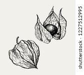physalis fruit vector drawing.... | Shutterstock .eps vector #1227512995