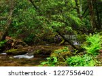 rushing mountain stream ...   Shutterstock . vector #1227556402