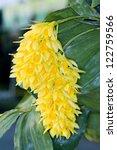 Small photo of Dendrobium sulcatum Lindl.