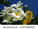 colorful flowers.group of...   Shutterstock . vector #1227640402