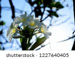 colorful flowers.group of...   Shutterstock . vector #1227640405
