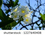 colorful flowers.group of...   Shutterstock . vector #1227640408