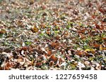 yellow autumn leaves on the... | Shutterstock . vector #1227659458