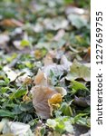 yellow autumn leaves on the... | Shutterstock . vector #1227659755