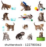 Stock photo collection of kitten isolated on white background a set of funny cats british kittens collection 122780362
