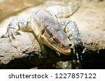 a close up portrait of a... | Shutterstock . vector #1227857122