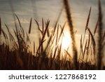 grass gold  beautiful sunset | Shutterstock . vector #1227868192