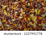 Texture Of Autumnal Colored...