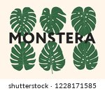 monstera tropical jungle plant... | Shutterstock .eps vector #1228171585
