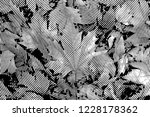 fall leaves. halftone with... | Shutterstock . vector #1228178362