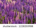 trinity  newfoundland  canada   ... | Shutterstock . vector #1228203988