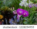 soft focus  close up beautiful... | Shutterstock . vector #1228254955