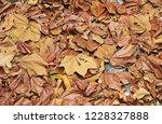beautiful dry leaf suitable for ... | Shutterstock . vector #1228327888