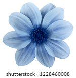 Blue Flower Dahlia Isolated On...