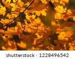 autumn coloured leaves in the... | Shutterstock . vector #1228496542