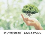 male hand holding tree on... | Shutterstock . vector #1228559302