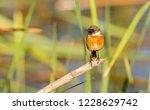 a perched bird | Shutterstock . vector #1228629742