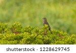 a perched bird | Shutterstock . vector #1228629745