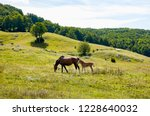 mare and foal newborn together...   Shutterstock . vector #1228640032