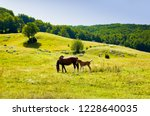 mare and foal newborn together...   Shutterstock . vector #1228640035