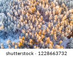 snow covered pine forest from... | Shutterstock . vector #1228663732