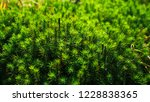 beatiful close up green moss... | Shutterstock . vector #1228838365