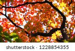 view from ground seeing leaves... | Shutterstock . vector #1228854355