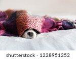cute dog sleepeing under the...   Shutterstock . vector #1228951252