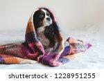 cute dog sitting under the warm ...   Shutterstock . vector #1228951255