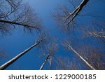 gray trees on the blue sky... | Shutterstock . vector #1229000185